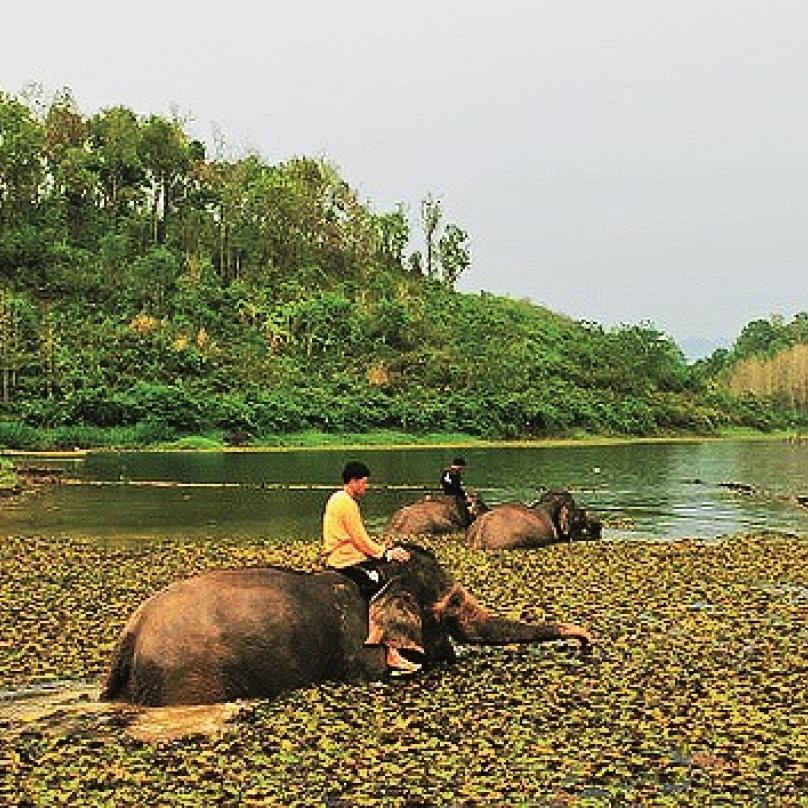 """Záchranná stanice slonů Sayboury, Laos – kdysi """"země milionů slonů"""", dnes jich tu kvůli masivnímu odlesňování avybíjení žije cca 1600. Starají se tu oty staré, kterých se zbavili jejich majitelé, jimž sloužili tahání vykáceného dřeva."""