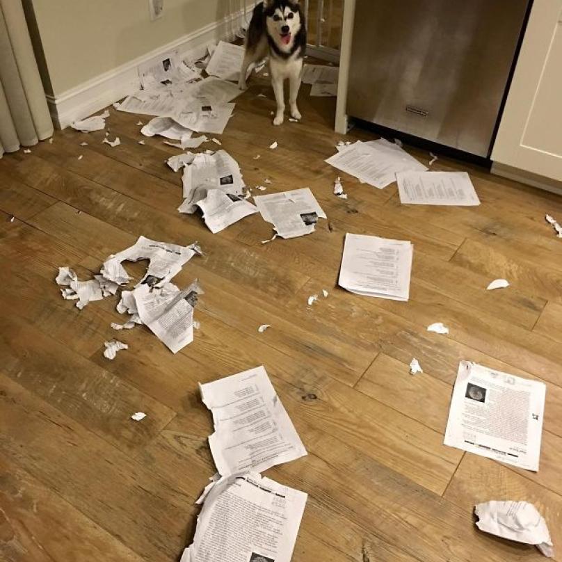 """""""Pes mi snědl úkol,"""" to je pěkně tupá výmluva. Tady ji ovšem - i s obrazovým důkazem - nepoužil student, ale kantor."""