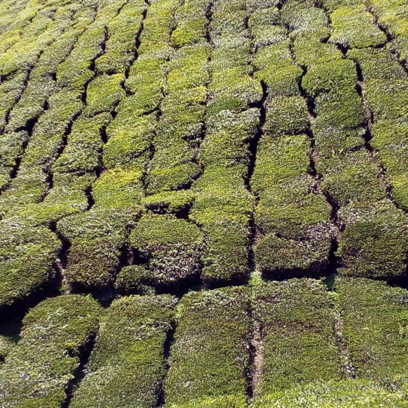 Jakoby krajina byla pokryta zeleným kobercem