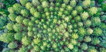 Jedno znejzajímavějších míst vkalifornském vnitrozemí je obrovský park Eldorado National Forest. Jeho součástí jsou také uměle vysázené borovicové kultury, na kterých se již desítky let  zkoumá, jak se stromům daří vsoustředných kruzích, mezi kterými s