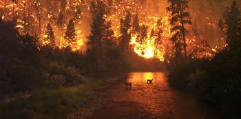 Lesní požár může způsobit ten, kdo odhodí nedopalek.