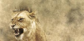 K chovu lvů je třeba speciální povolení.