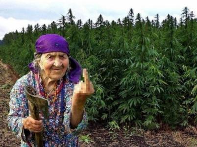 Pár kalifornských důchodců jel na Vánoce za rodinou s 27 kilogramy marihuany. (Ilustrační foto)