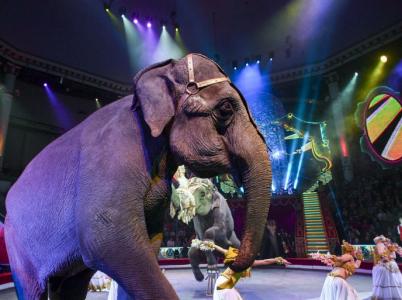 Británie následuje skotského příkladu a od roku 2020 zakáže divoká zvířata v cirkusech.