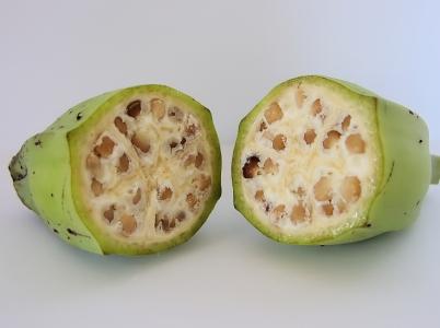 Starověký banán vypadal takto.