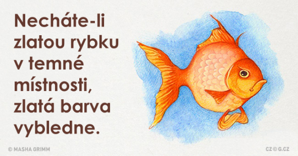 2) Máte doma zlatou rybku? A plní přání ona vám, nebo vy jí?