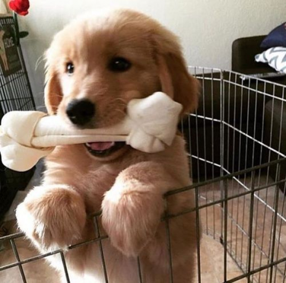 2# Koukni, jakou mám velkou kostičku!