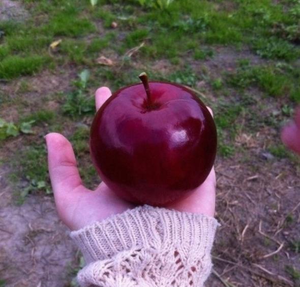 3) Jablko v dokonalém tvaru (trochu jako to z pohárky o Sněhurce)