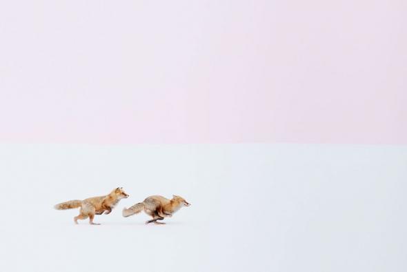 3.  První cena (příroda): Ať si kdekoliv, budu tě následovat, Hokkaido, Japonsko