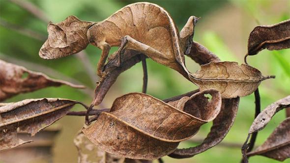 3) Listy, nebo gekon