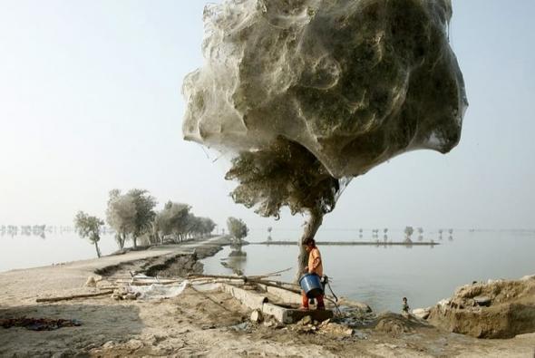 2. Pavoučí strom