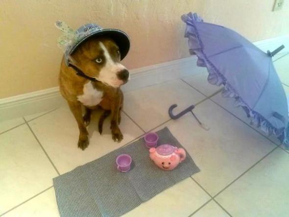 1# Jenom na chvíli opustíte byt a vrátíte se k čajovému dýchánku se psem