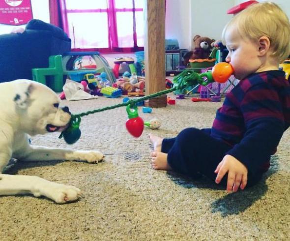 3# Zvyknou si na sebe natolik, že budou hrát společné hry! Samozřejmě psí