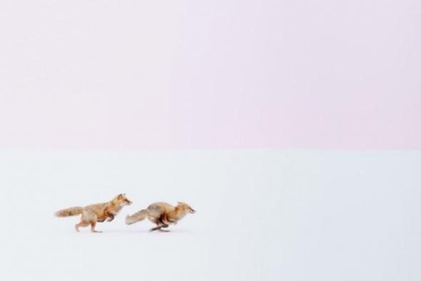 Vítěz kategorie v přírodě: Kamkoliv půjdeš, půjdu za tebou, Hokkaido, Japonsko