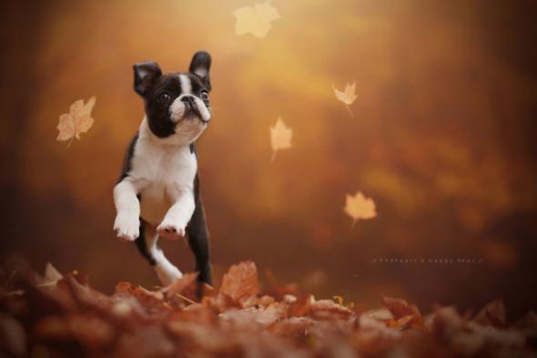 Ta radost z volnosti a krása podzimní krajiny prostě musí zvednout náladu.