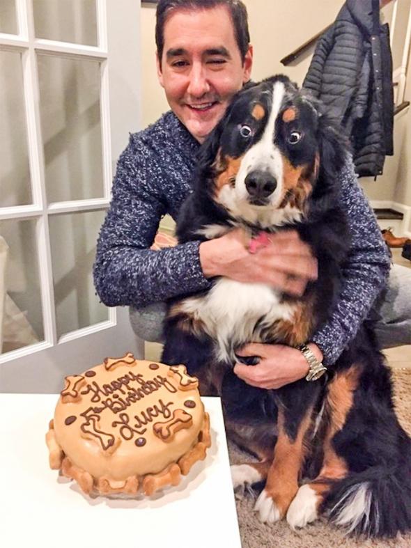 Jak může vypadat pes, když mu k narozeninám objednáte dort? Asi to moc nechápe...